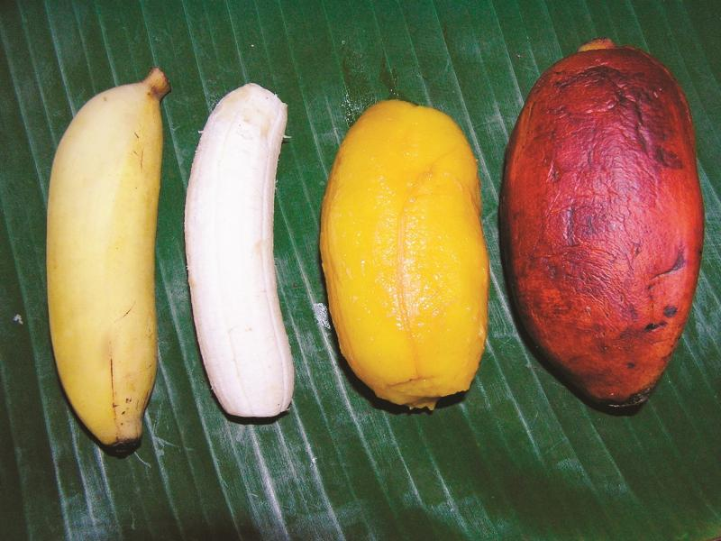 Orange-fleshed bananas can contain 6 times as much vitamin A as white-fleshed varieties. Credit: Musarama.org